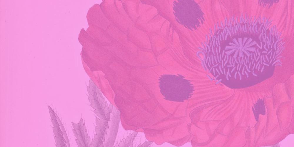 Botanical Illustration of Poppy Flower with Pink Overlay