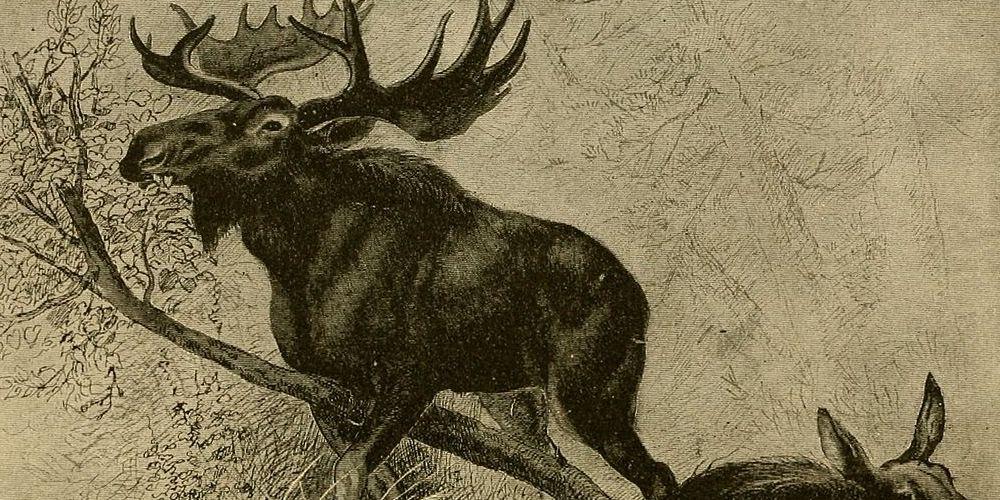 Illustration of a Moose, sepia tone